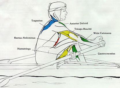 Rowing Machine Muslces Used Recovery