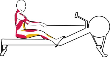 muscles worked by rowing machine