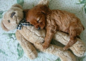 Comfortable puppy