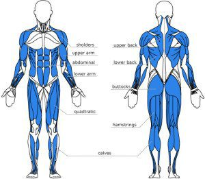 Rowing Machine Muscles Used
